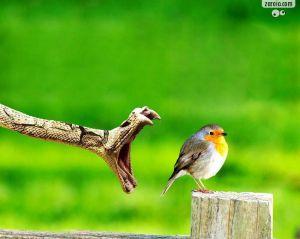 A cobra e o pássaro, atendimento publicitário e o cliente respectivamente.rsrsrs